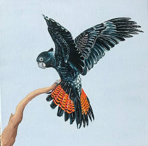Flying black cockatoo by Jayne Crow