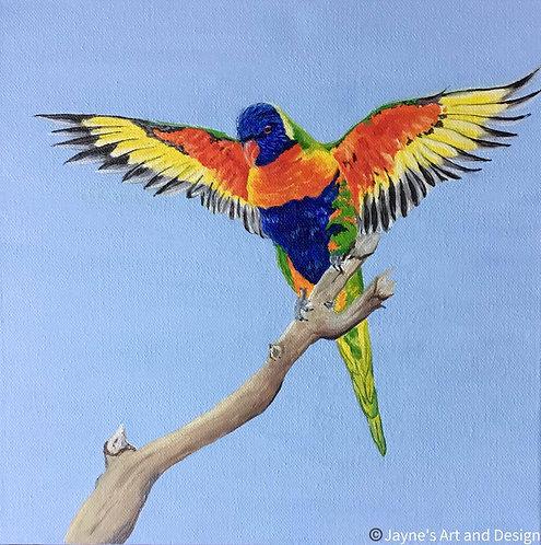 Flying rainbow lorikeet by Jayne Crow