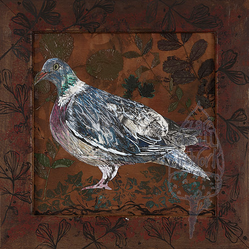 Mr Pigeon by Clare O'Neill
