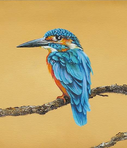 Kingfisher on branch by Jill Iliffe