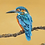 Thumbnail: Kingfisher on branch by Jill Iliffe