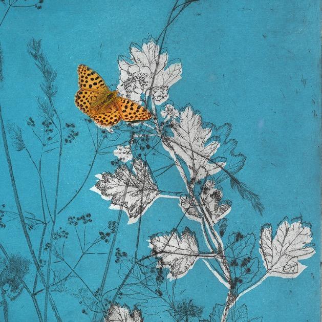 Birling Butterflies