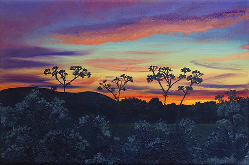 Cow parsley at sunset by Emily Grocott