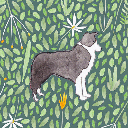 Border Collie Greetings Card by Samantha Hall