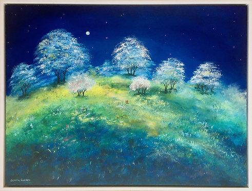 Star gazing by Serena Sussex