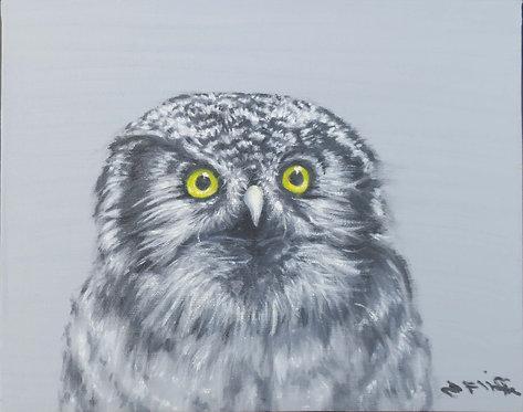 Owl by Jill Iliffe