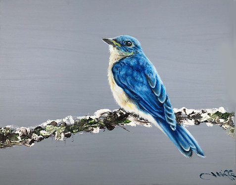 Bluebird by Jill Iliffe