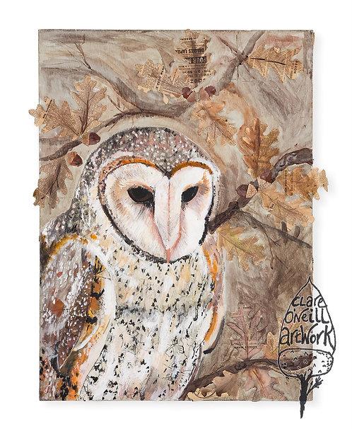 Barn Owl by Clare O'Neill