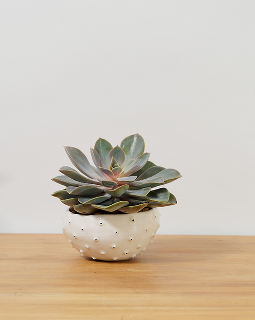 Urchin Pot (small) by Cat Brown