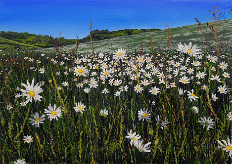 May daisy meadow by Emily Grocott