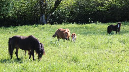 Elevage des Monts d'Auvergne