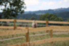 Pré cheval miniature