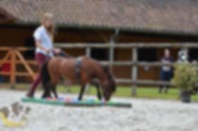 Longues rênes cheval miniature