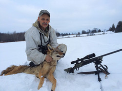 The first coyote of the season