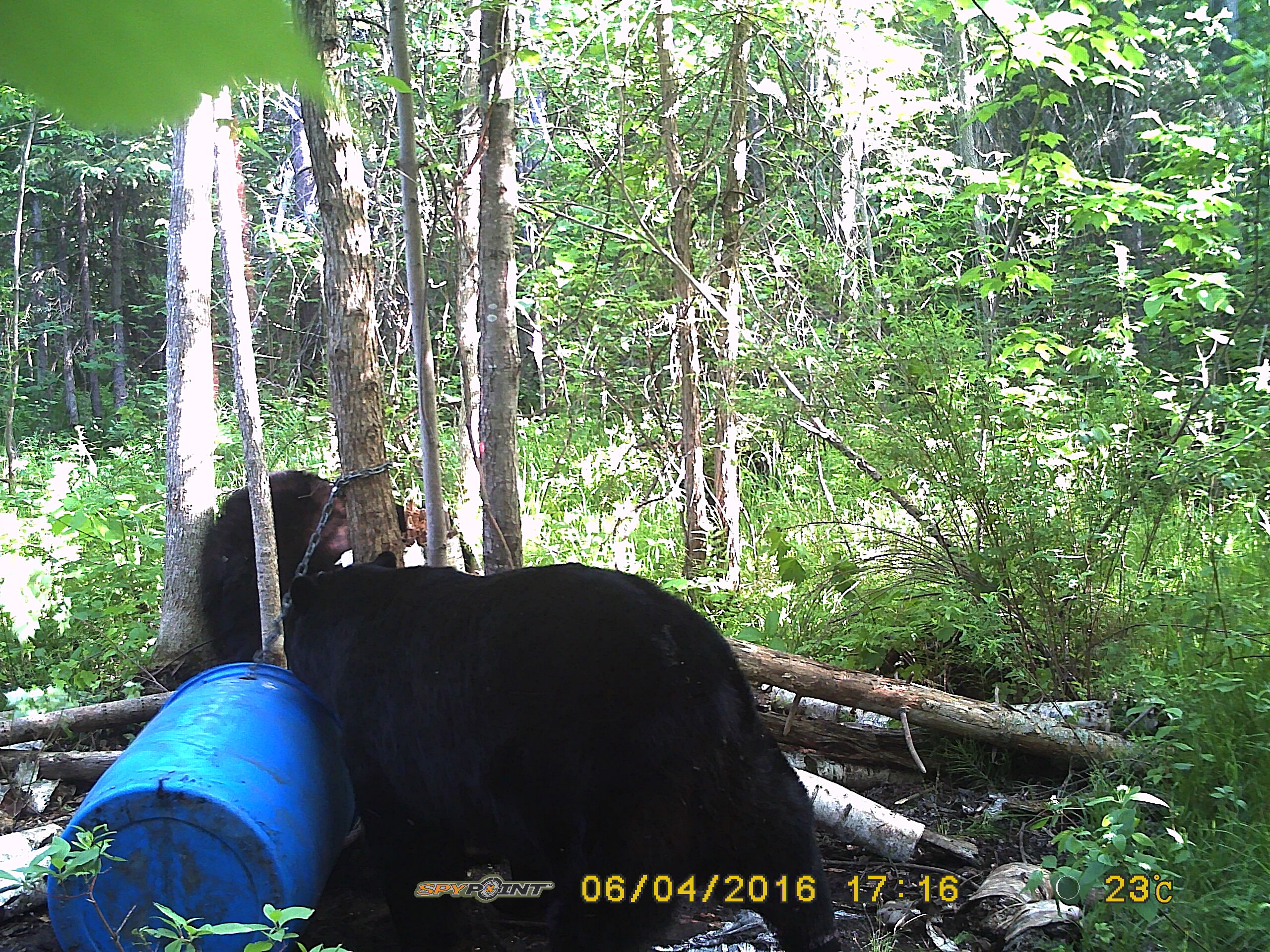 2016 Spring Bear Hunt - Southern Ont