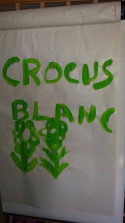 dessin handicap crocus blanc