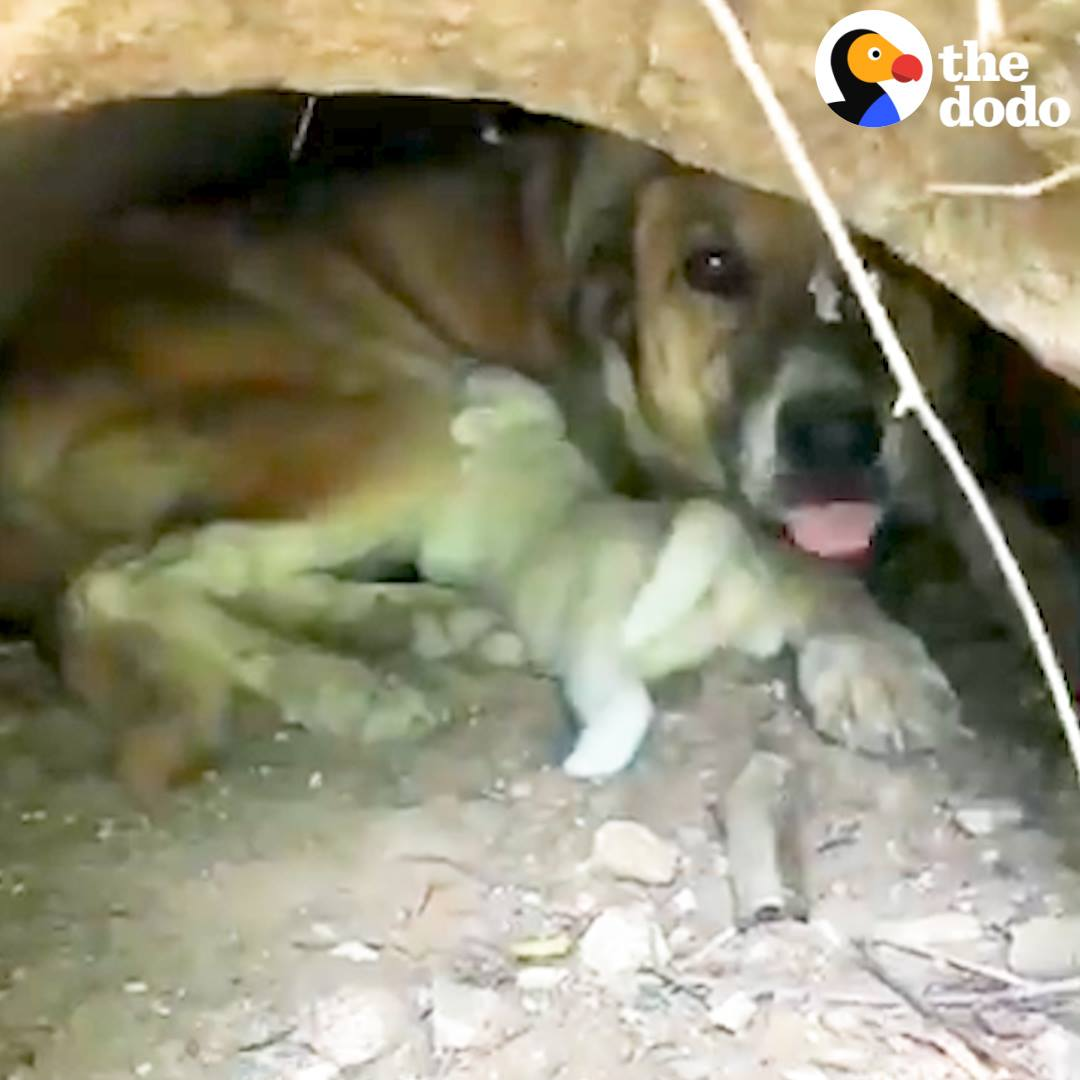 People Rescue Stray Dog And Her Babies From Drainpipe