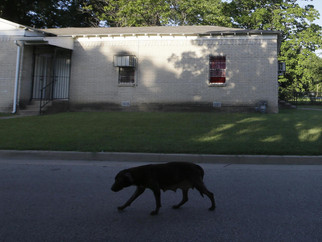 Nonprofits Are Stepping In To Help Loose Dogs In Dallas — And Prevent More Attacks