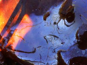 Eté sec: Stream Art dans les étangs