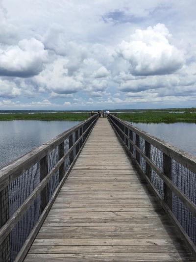 Payne's Prairie Pier - Julia Sullivan