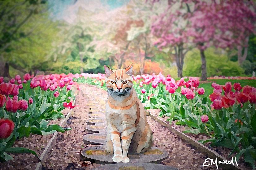 Cat on Garden Path - Elizabeth Maxwell