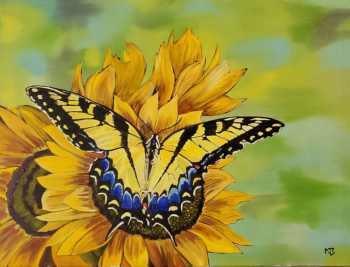 Tiger Swallowtail Butterfly - Matthew Baxter