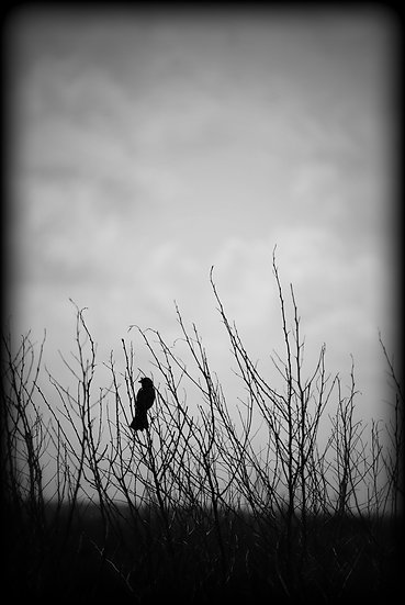 Bird on the Prairie - Robin Wilkerson