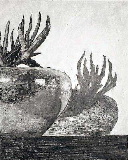 Shadows of Aloe on Glass Bowl - Angela L. Gregory