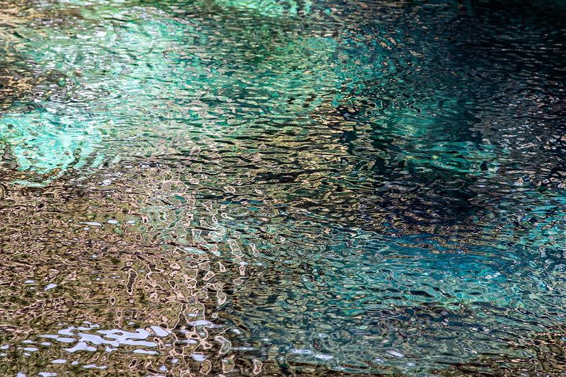 Juniper Springs - Michelle Nagri