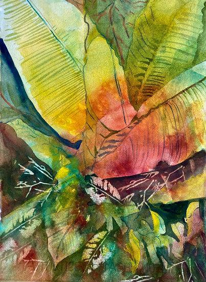 Florida Wild - Sue Kelman