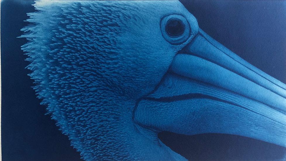 Heron chases dreams - Oliver Keyhani