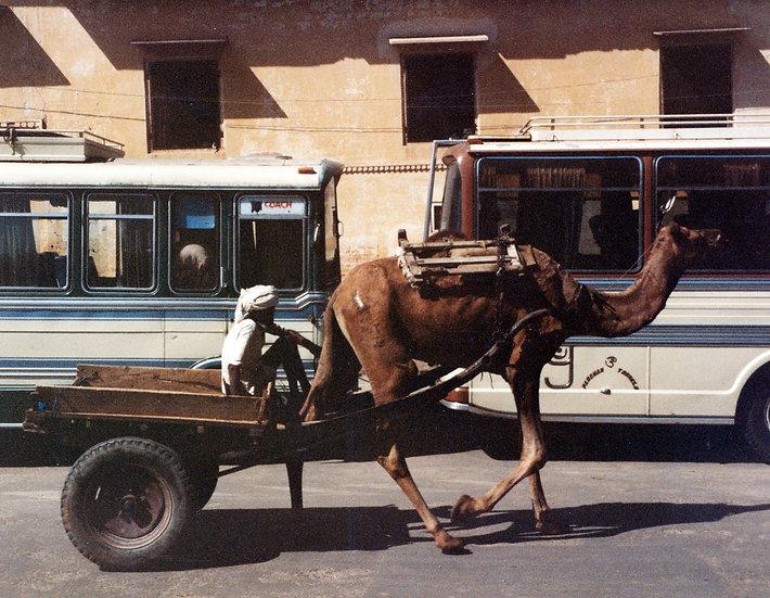 Camel Cart, Jaipur - Greg Lindeblom