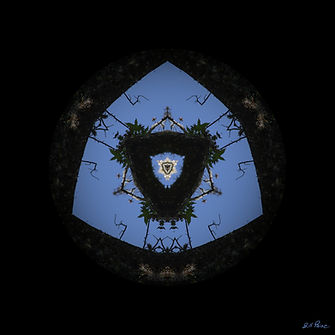 paine_tree-faces - William Paine.jpg