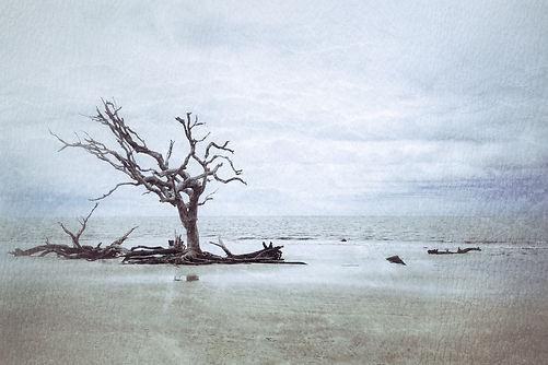 Pearson_Trees Adrift- (1).jpg