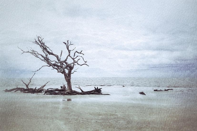 Trees Adrift - Joyce Pearson