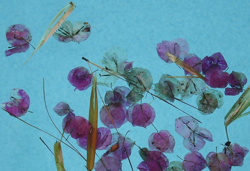 Flotsam - Greg Lindeblom