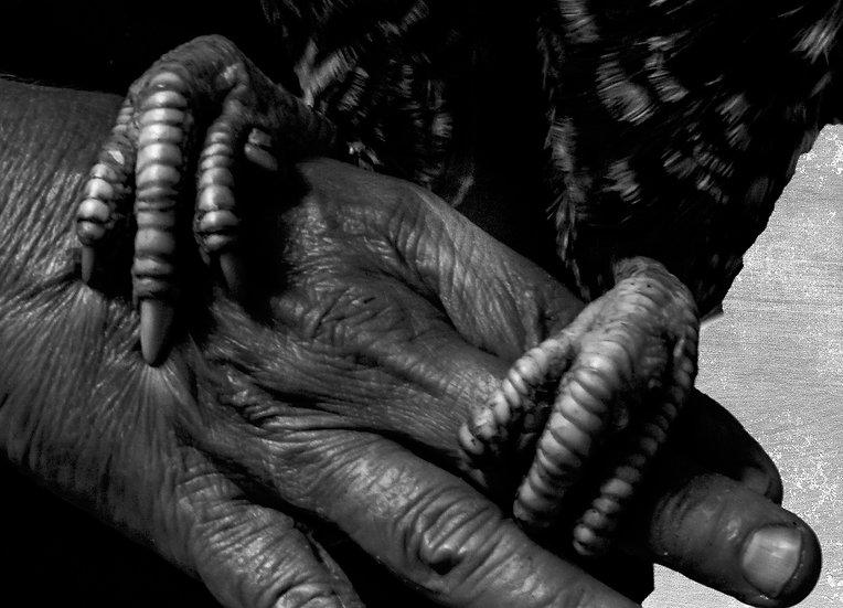 Hand and Feet - Craig Walters