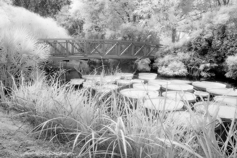 Kanapaha Gardens - Cheryl Slechta