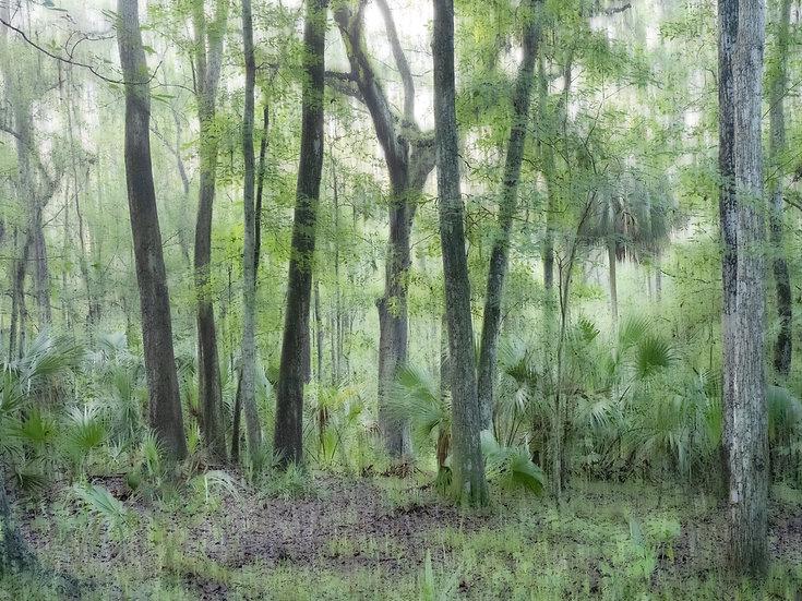 Florida Hammock - Cheryl Slechta