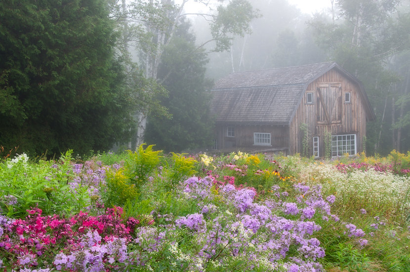 Flowers and Fog - Joyce Pearson