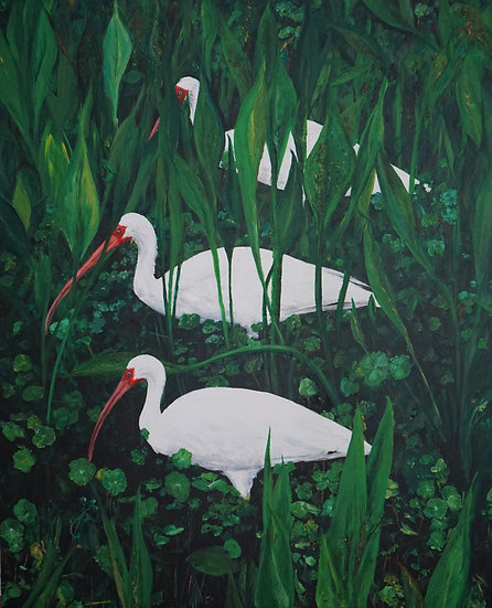 3 White Ibis  - Johnny Coleman