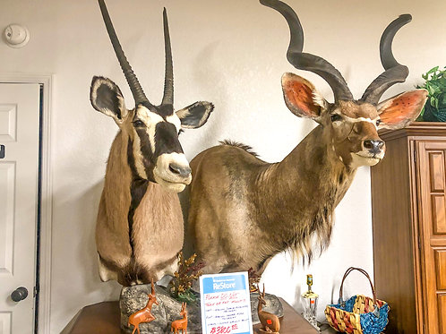 Mounted Taxidermy Antelopes
