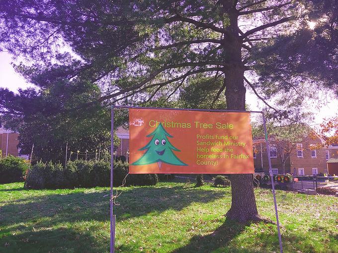 Tree banner.jpg