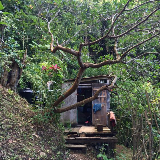 Dominika - A farm, ahol éltünk