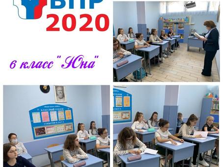 Всероссийские проверочные работы. 1 октября 2020. Биология - 7 класс. История  - 6 класс