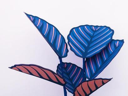 Brazen Botany, arte y plantas de interior.
