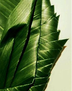 Leaf Fold Pattern Floral