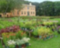 plants&house.jpg