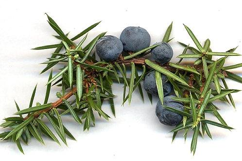 Juniper Berries (Juniperus communis) - 2 oz.