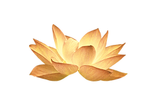Real Golden Lotus.png